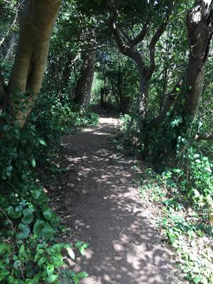城ヶ崎海岸の木のトンネル